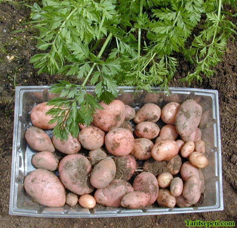 rulo-patates-salatasi-tarifi