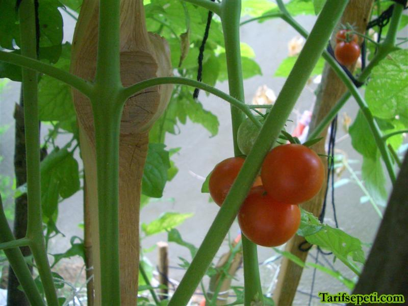 bahcem-7-cherry-domatesler