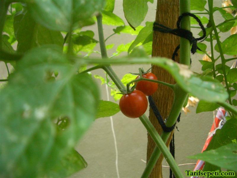 bahcem-8-cherry-domatesler